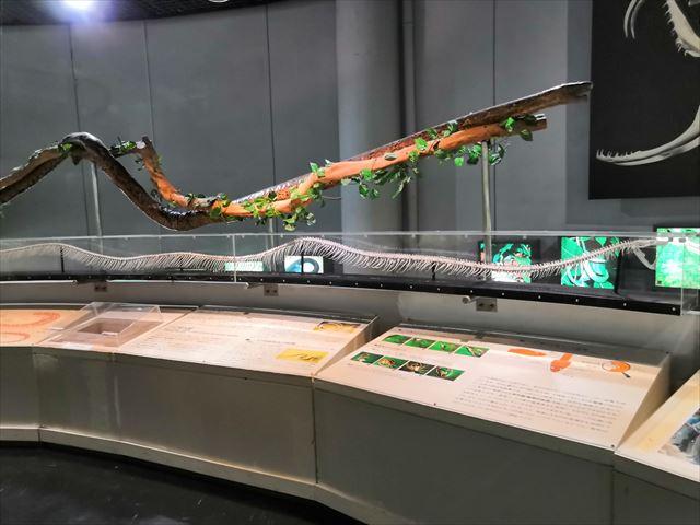 ニシキヘビの骨格標本
