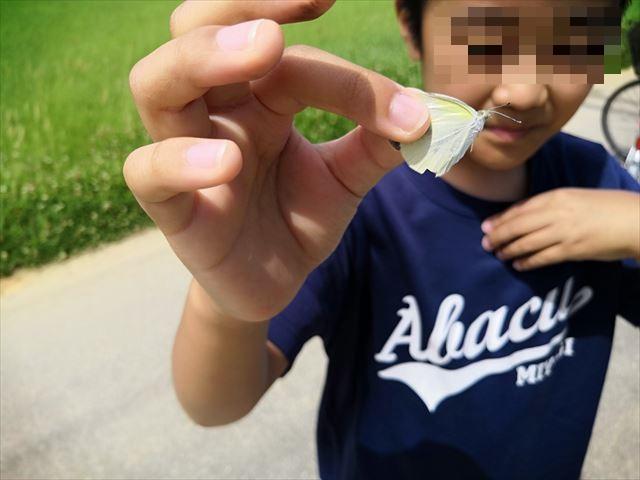 蝶を捕まえる