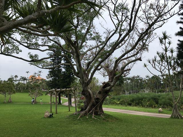 木登りできる木