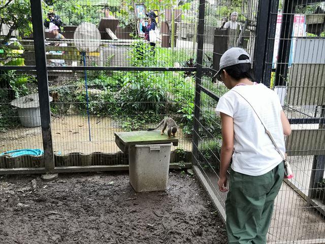 サルに近付く