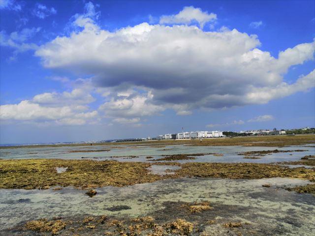 西洲海岸でサンゴと海の生き物観察