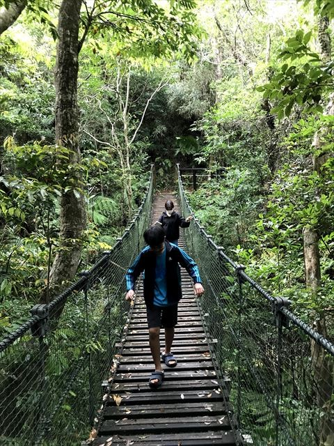 やんばる学びの森のネイチャートレイルで大自然体験